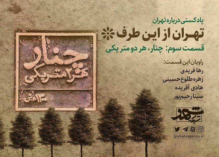 تهران از این طرف/  چنار، هر دو متر یکی
