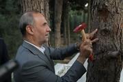 آغاز پلاک گذاری ۴۵۰۰ درخت کهن در باغ بهشت