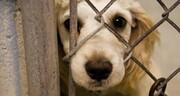 لایحه حمایت از حیوانات؛ سازماندهی قوانین در زمینه حقوق حیوانات