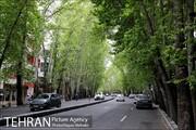 خیابان ولیعصر باید با نگاهی منسجم و واحد ساماندهی شود
