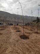 اتمام فاز نخست عملیات درختکاری در بزرگراه شهید نجفی رستگار منطقه ۱۵