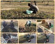 آعاز کاشت ۳۲ هزار پیاز لاله در منطقه ۱۵