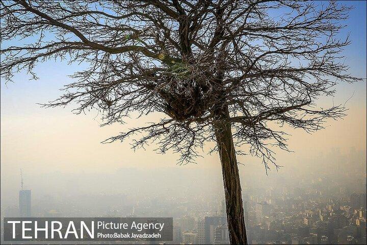 تغییر شاخصها یکی از دلایل افزایش روزهای آلوده است