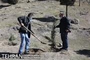 هفته درخت در تهران