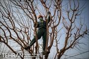 مبنای افزایش سالانه جریمه قطع درختان تورم اعلامی بانک مرکزی است