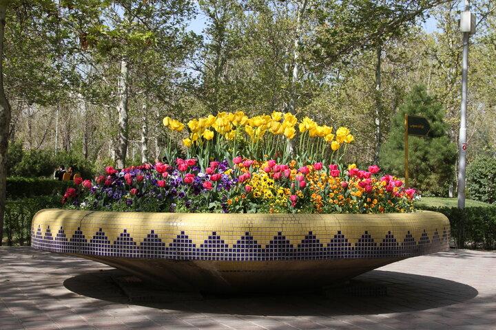 شکوفایی  ۵۰ هزار گل  بهاری در قلب پایتخت