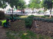 توسعه ۸۲۹ متر مربع فضای سبز در منطقه ۱۰
