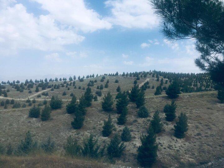 اقدامات منطقه۱۳برای پیشگیری از آتش سوزی جنگل ها