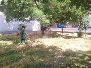 پاکسازی فضاهای سبز منطقه ۱۵ از علف های هرز