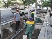 اجرای عملیات چسب محافظتی به تنه درختان طولانی ترین خیابان پایتخت