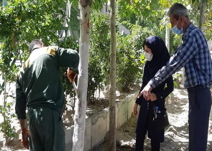 پیشگیری از خزان زودرس درختان چنار