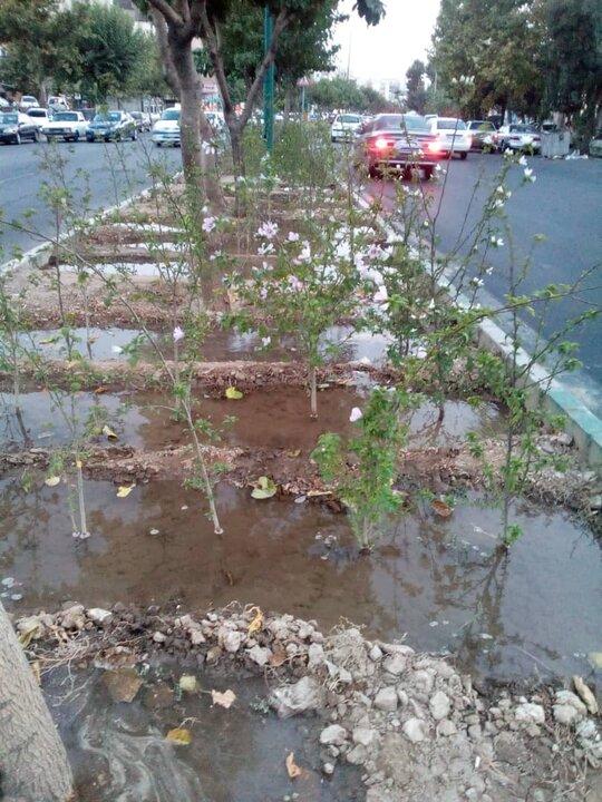 یک تیر و دو نشان شهرداری منطقه ۴ در آبیاری فضاهای سبز شهر
