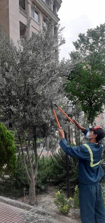 تیمار ۳ هزار اصله درخت در منطقه ۴ تهران