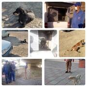 جمعآوری و ساماندهی سگهای ولگرد منطقه ۱۷