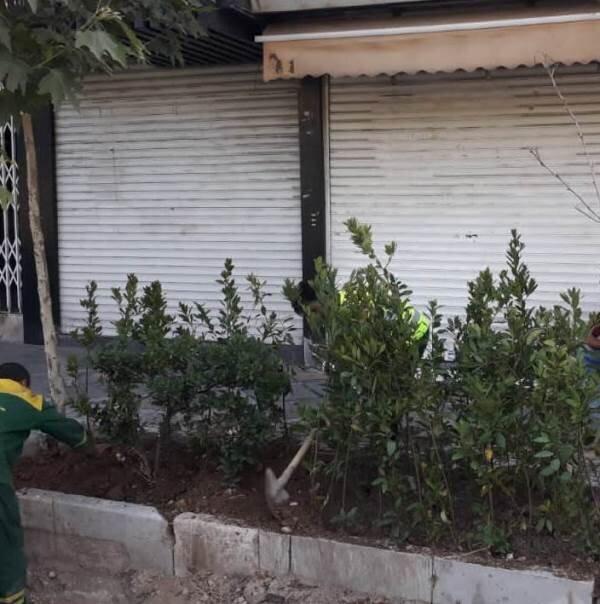 کاشت ۶۰۰ درختچه در خیابان ولیعصر(عج)