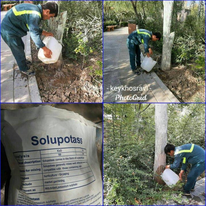 برنامه ویژه منطقه ۱۷ برای مقاوم سازی درختان در برابر سرما