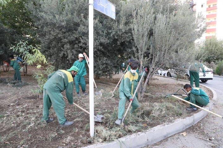 عملیات به زراعی فضای سبز و هرس ترون آغاز شد